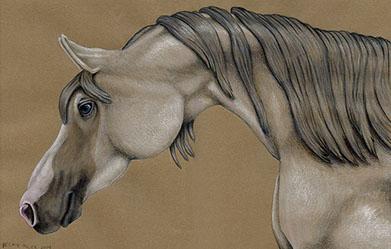 arabian-horse-105x16