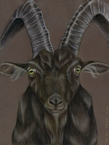 Black Phillip Goat