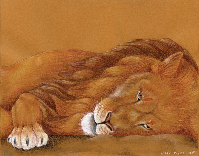 Lion Napping