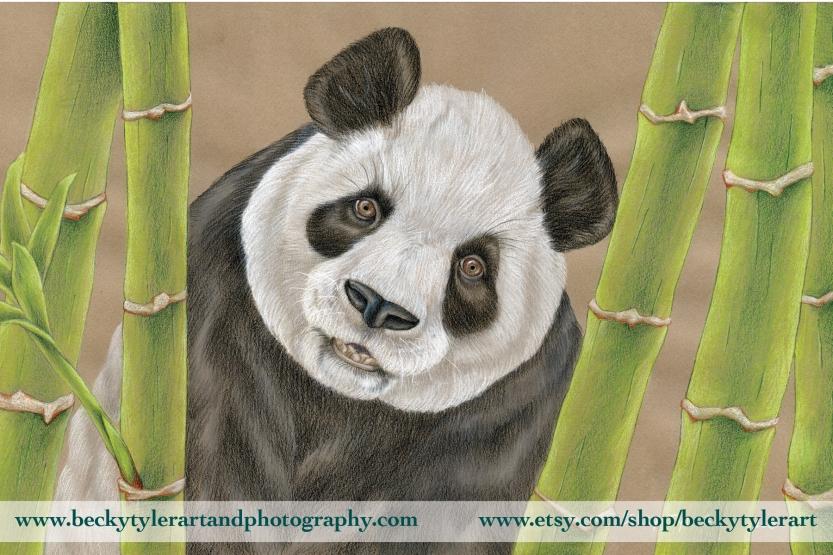Panda 11x17