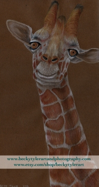 Reticulated Giraffe_Portrait