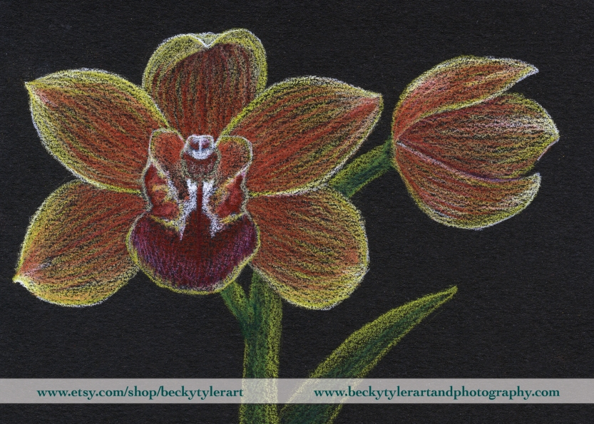 Cymidium Orchid Drawing
