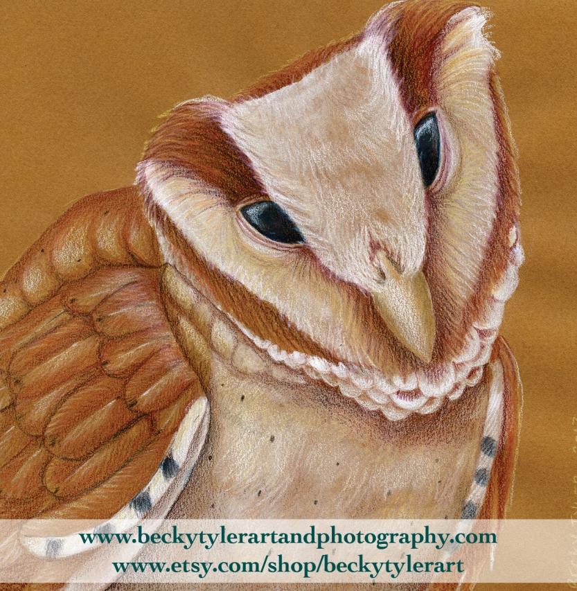 oriental bay owl.jpg