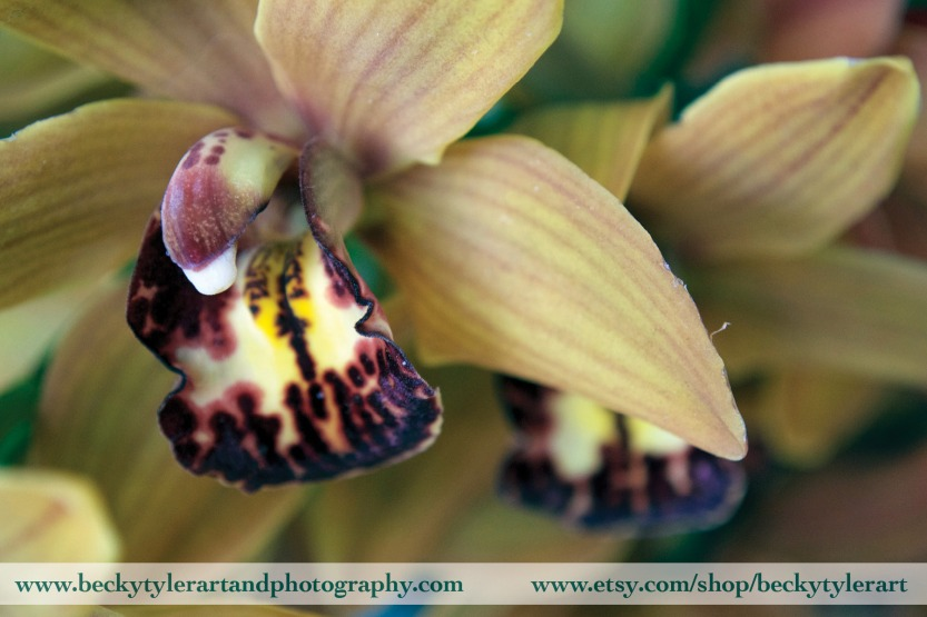 2019 Cymbidium Orchid 2