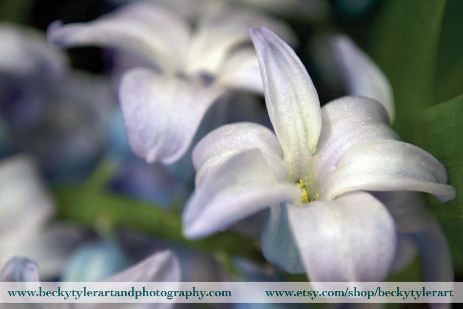 2019 Hyacinth 2