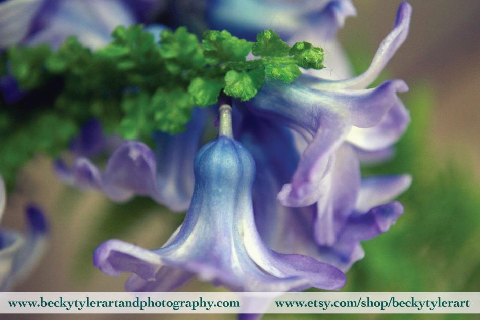 2019 Hyacinth 4