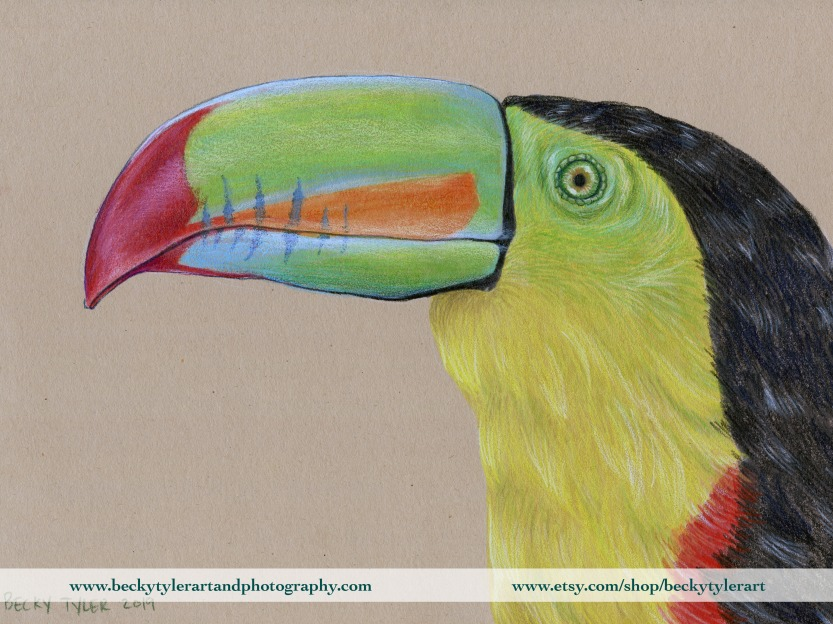 Keel Billed Tucan