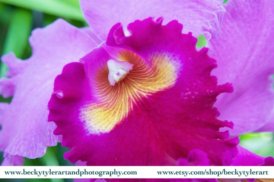 2018 Cattleya Orchid