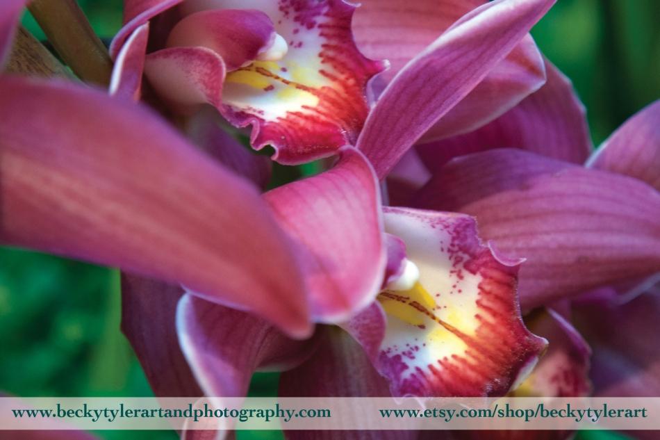2018 Cymbidium Orchid 2