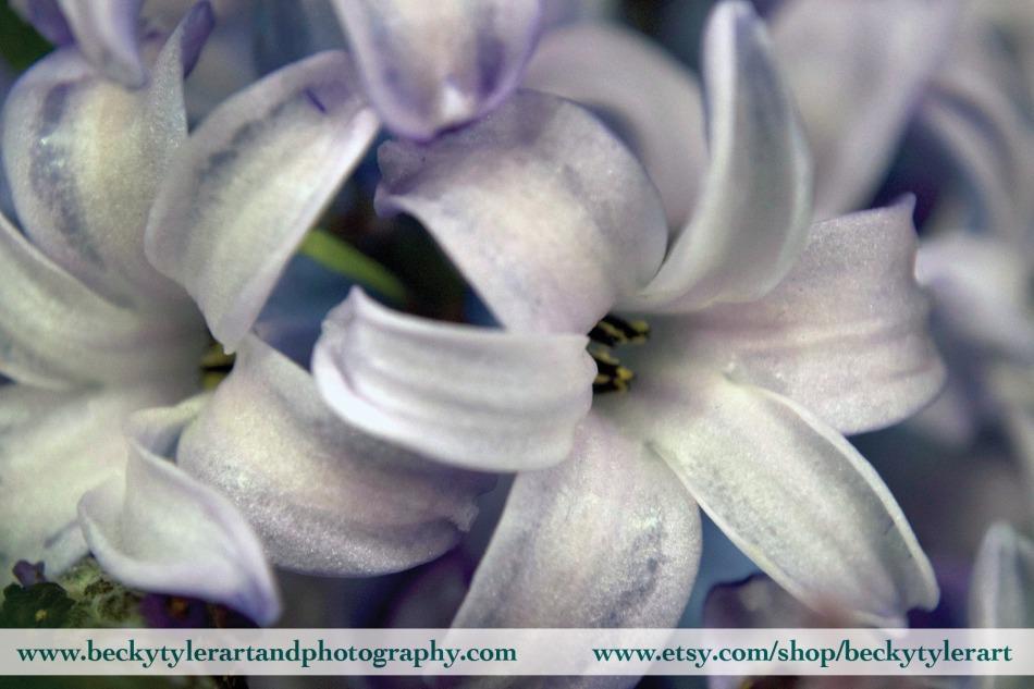 2019 Hyacinth 5