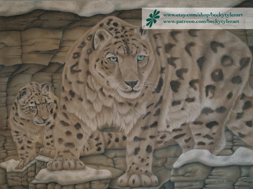 snow leapards