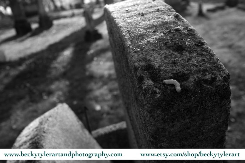 Maple Grove Cemetery_contrast 2