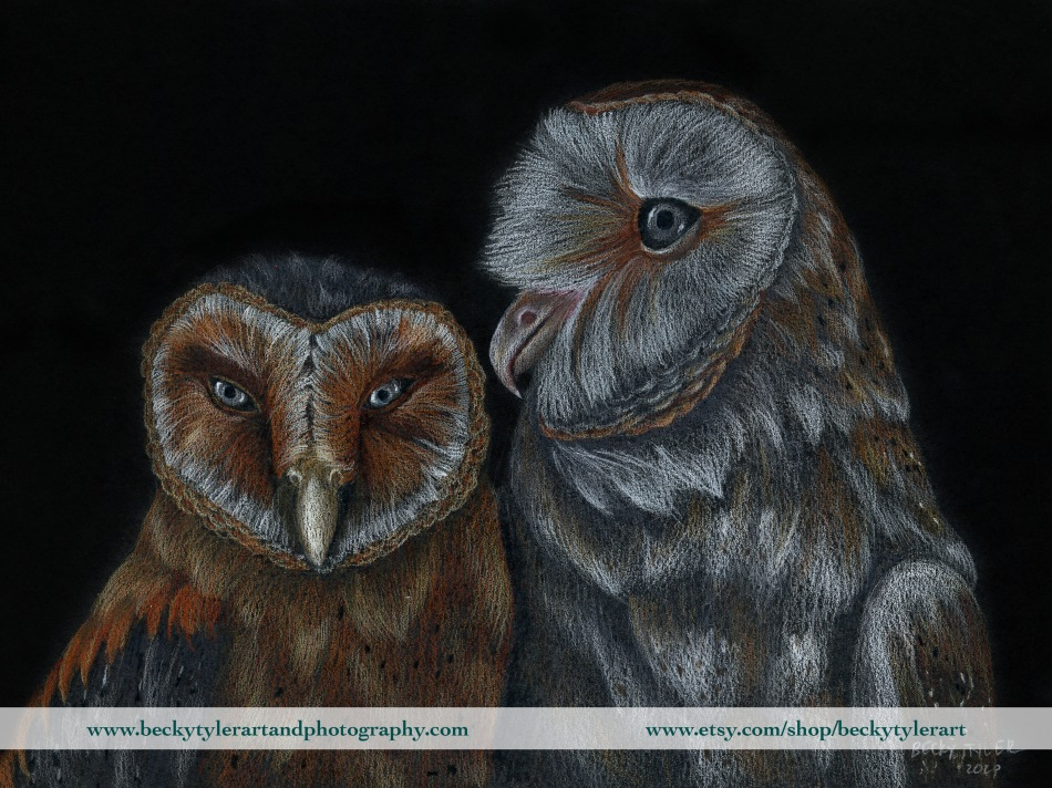 2020 Barn Owls