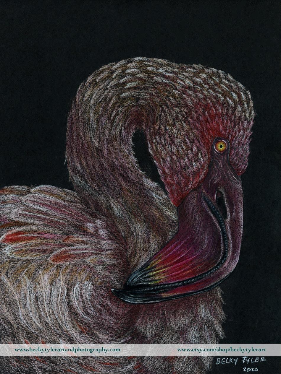 2020 Lesser Flamingo