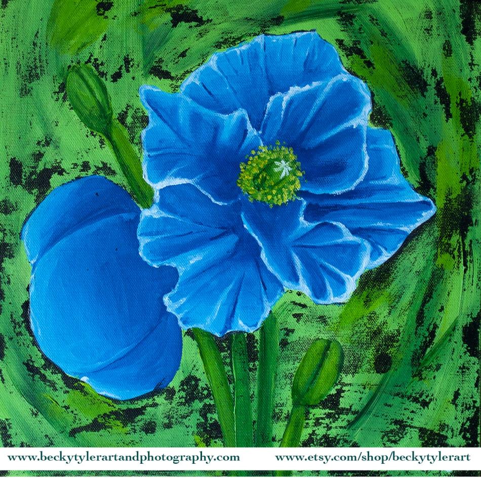 2020 12x12 Blue Poppy