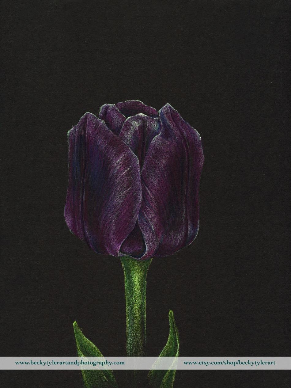 2020 9x12 Purple Tulip