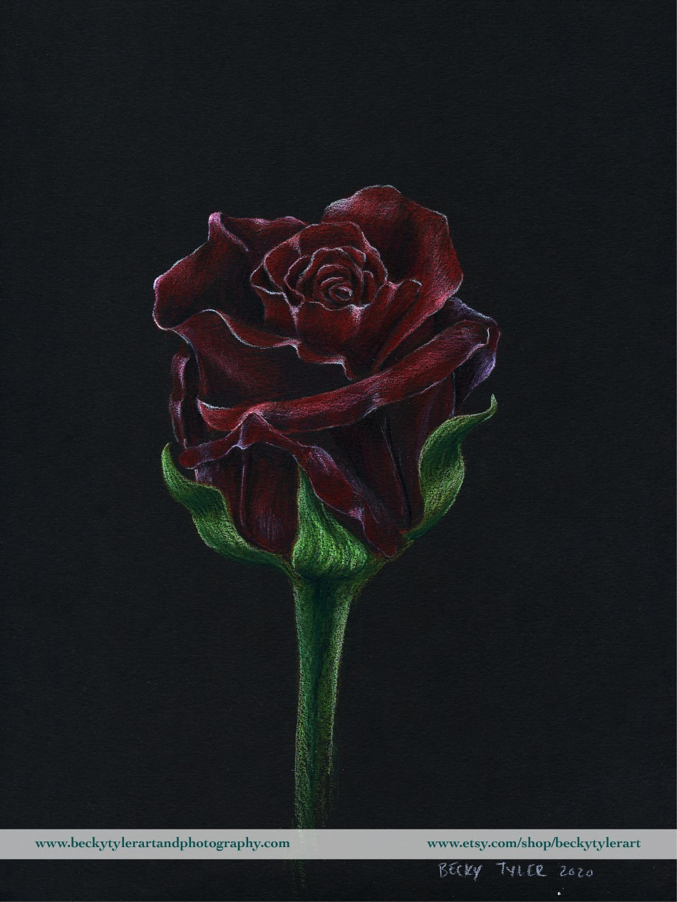 2020 9x12 Red Rose